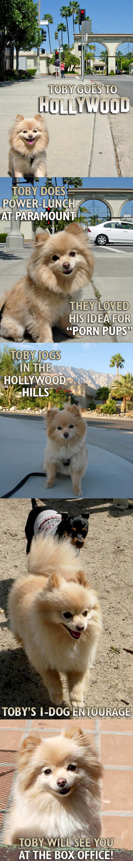 Toby Goes To Hollywood!