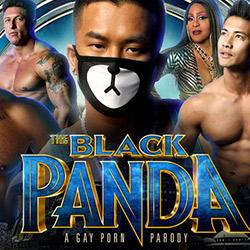 Peter Fever: Black Panda